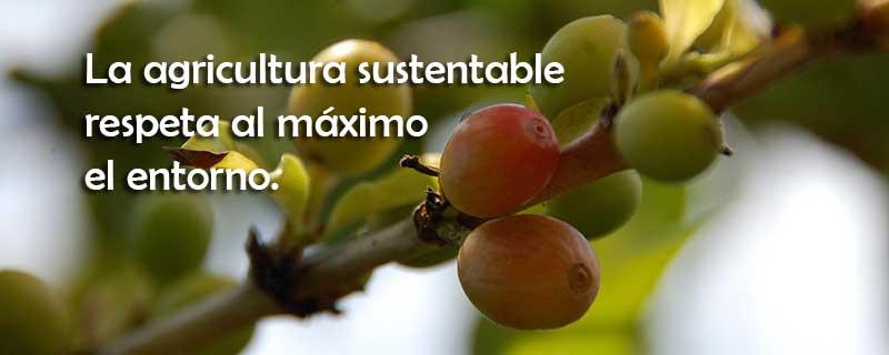 La agricultura sustentable respeta el entorno