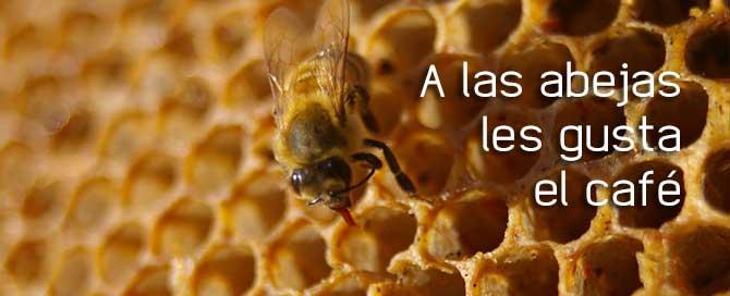 Los beneficios de la cafeína también en las abejas