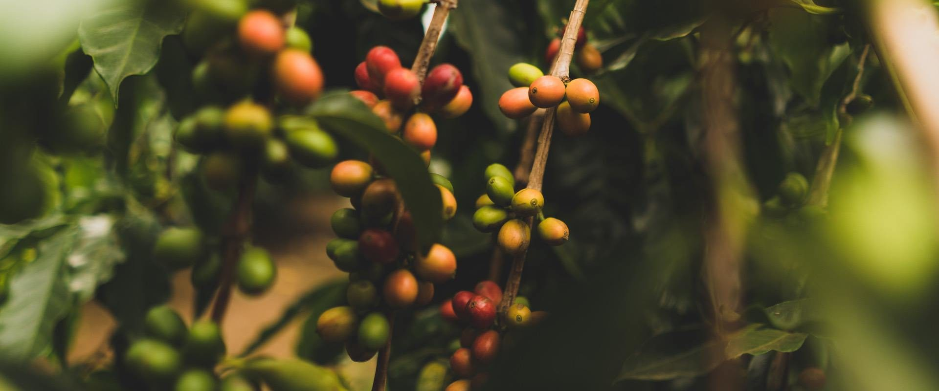 cafe-veracruz-online